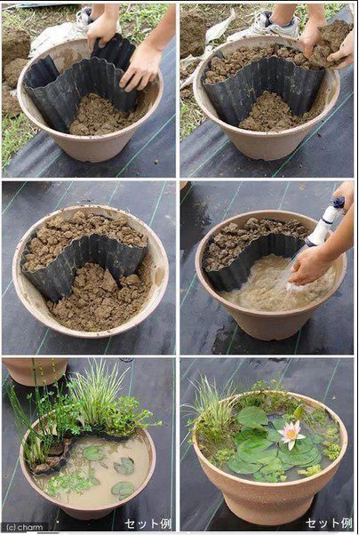 How to grow a tiny pond plants step by step DIY tutorial instructions