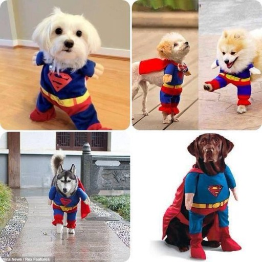 Cute super man dog dress idea