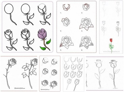 How to draw rose flowers step by step DIY tutorial instructions