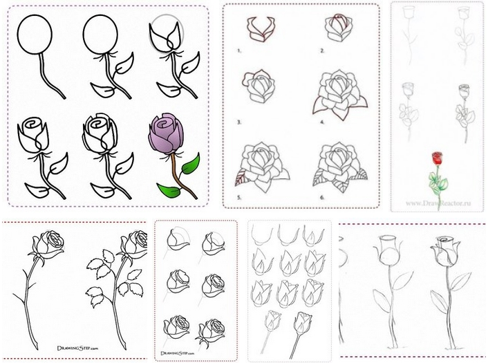 how to draw rose flowers step by step diy tutorial