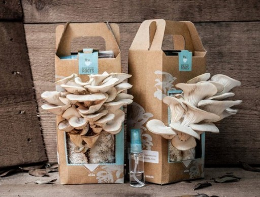 how to grow your own oyster mushrooms in used coffee grounds at home DIY tutorial step by step instructions