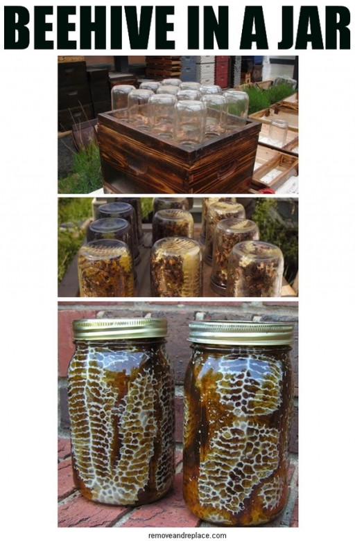 How to make a beehive in a jar for honey step by step DIY tutorial instructions