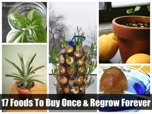 How to slash your grocery bill and grow your own foods step by step DIY tutorial instructions