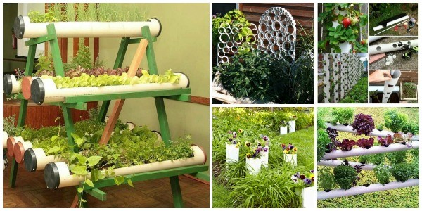 Hydroponics With PVC pipes
