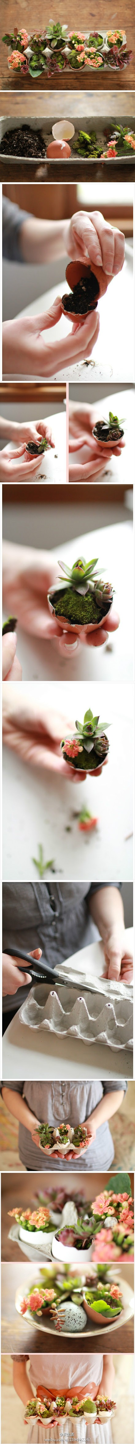 How to make cute DIY eggshell planters step by step tutorial instructions
