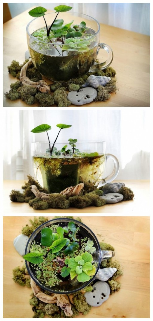 How To Make Lovely Office Desktop Water Garden How To Instructions