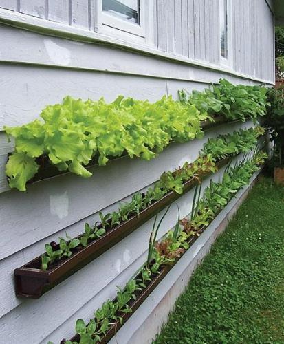 How to make rain gutter vertical vegetable garden step by step DIY tutorial instructions