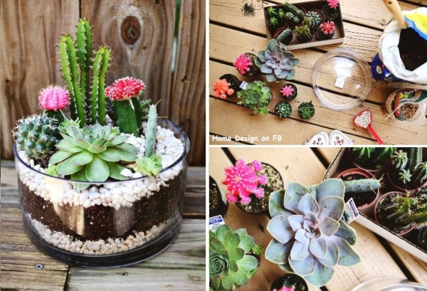 How To Make Simple Cute Indoor Cactus Garden Step By Step Diy Tutorial Instructions Thumb How
