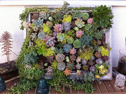 How to plant beautiful DIY framed vertical succulent garden living art step by step tutorial instructions