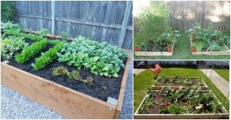 DIY raised wooden garden planting bed