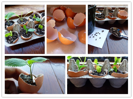 How to grow seeds in eggshells step by step DIY tutorial instructions
