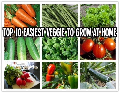 Top 10 easiest vegetables to grow at home