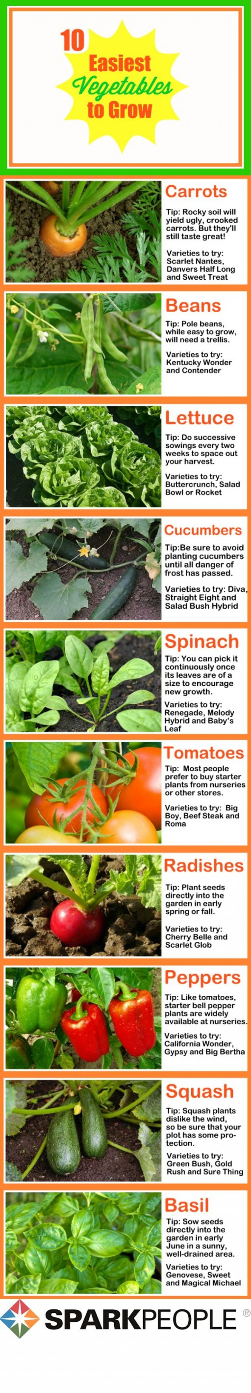 Top 10 easiest vegetables to grow at home list