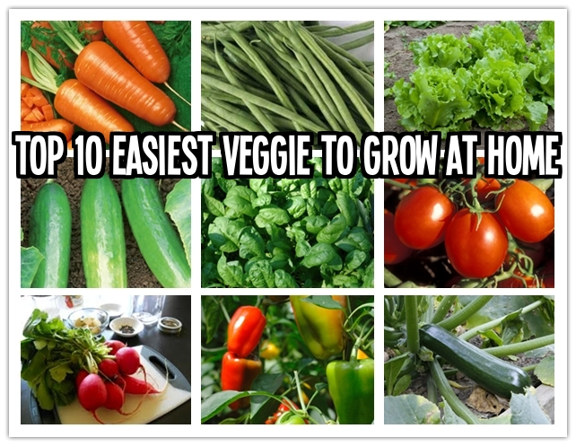 Top 10 easiest vegetables to grow at home how to for Easiest vegetables to grow