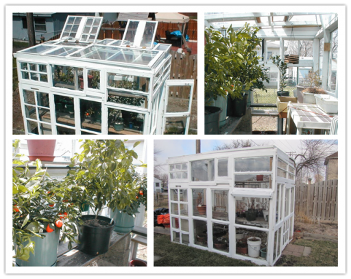 How to build a DIY greenhouse with recycled windows step by step tutorial instructions