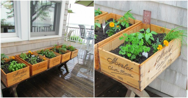 Wine Box Herb Garden