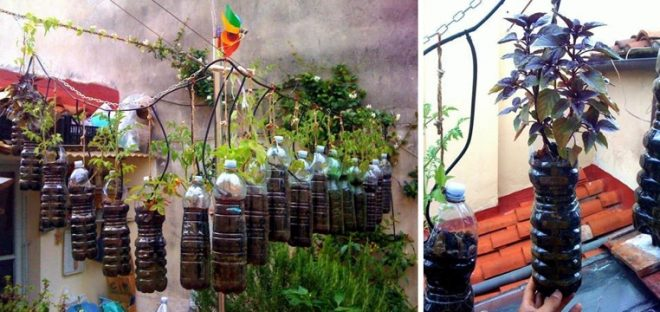diy-hanging-herb-garden-with-recycled-soda-bottles-1