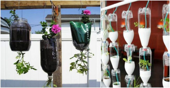 diy-hanging-herb-garden-with-recycled-soda-bottles-2