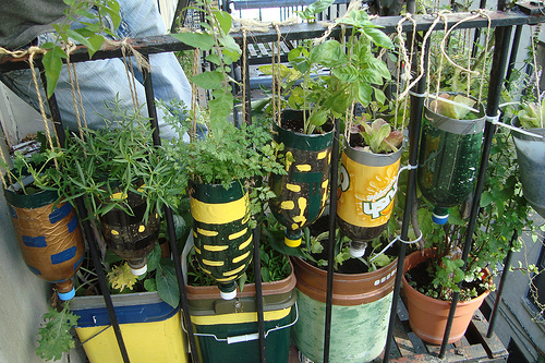 diy-hanging-herb-garden-with-recycled-soda-bottles-3