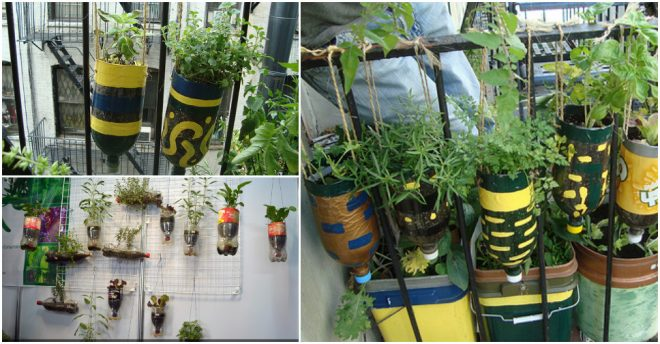 diy-hanging-herb-garden-with-recycled-soda-bottles
