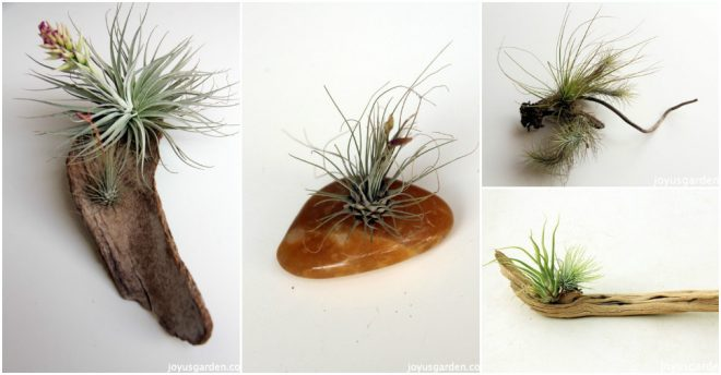DIY air plant adornments