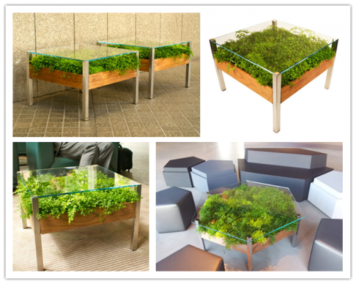 How to add green to your living room by this live table