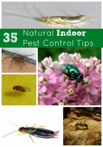 35 Tips For Natural Indoor Pest Control