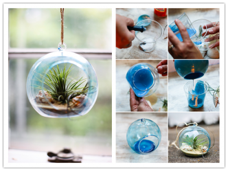 How To Make Air Plant Terrarium DIY Tutorial