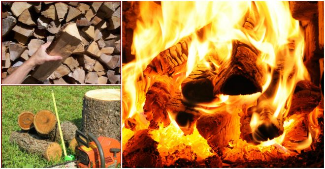 Best Firewood For A Wood Burning Fire Pit