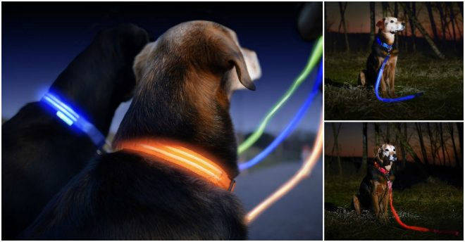 How To Make Wonderful LED Dog Leashes And Collars