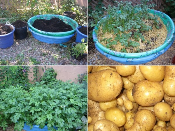 How To Make DIY Kiddie Pool Potato Patch