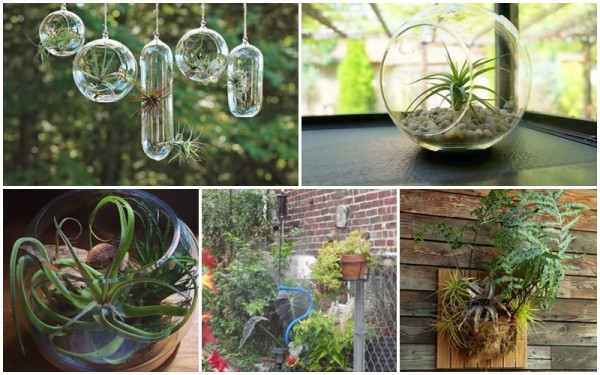How To Create an Air Plant Terrarium