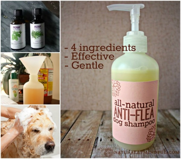 How To Make Natural Anti-flea Dog Shampoo