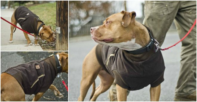 recyle-an-old-jacket-into-a-dog-vest