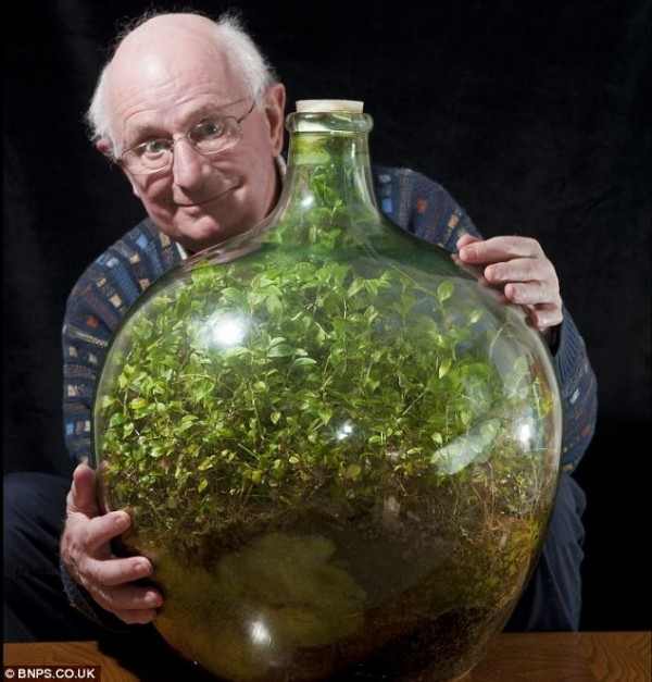 This Sealed Bottle Garden Has Been Thriving Since 1972 Without Being Watered 1