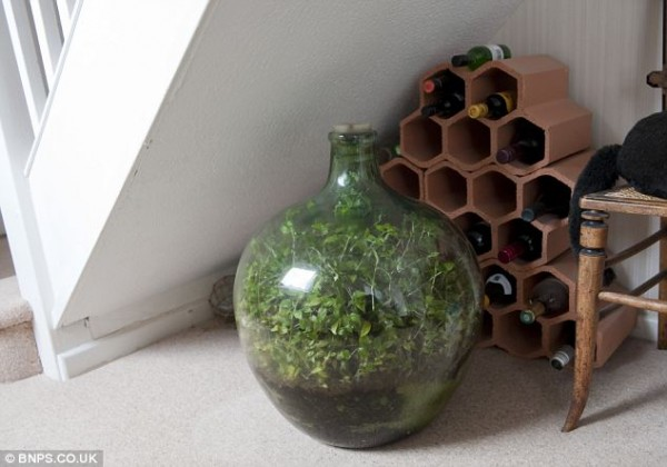 This Sealed Bottle Garden Has Been Thriving Since 1972 Without Being Watered 3