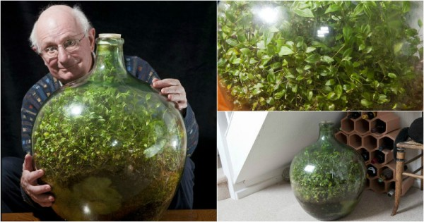 This Sealed Bottle Garden Has Been Thriving Since 1972 Without Being Watered