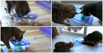 How To Make Fun Cat Puzzle