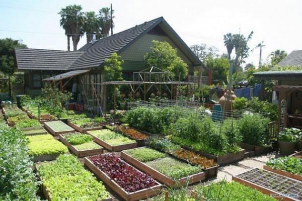 Gardening 6,000 Lbs of Food