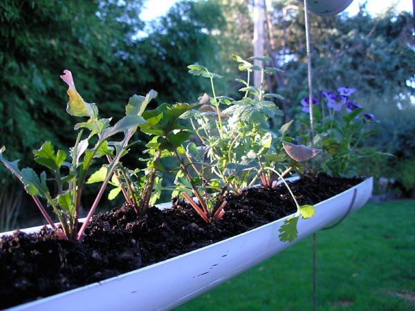 How To Make Hanging Gutter Vertical Garden 8