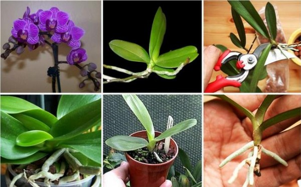 How To Repot An Orchid
