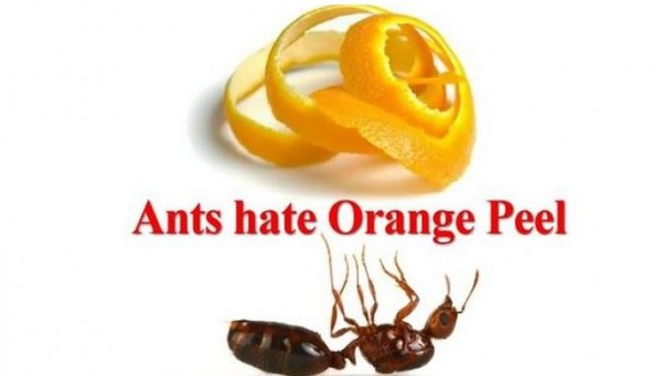 Pest Control Natural Ant Repellent