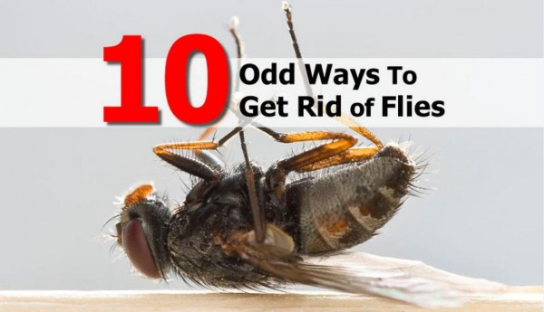 10 Odd Ways To Get Rid of Flies