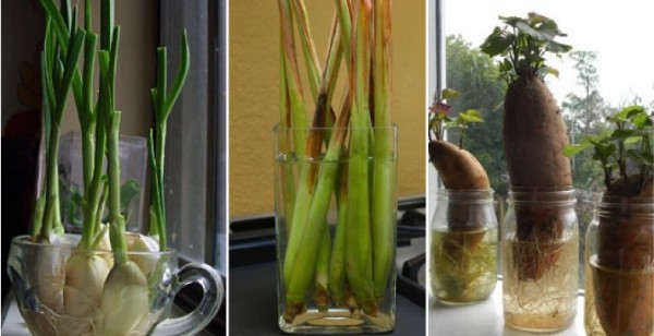 11 Veggies You Can Regrow Again And Again