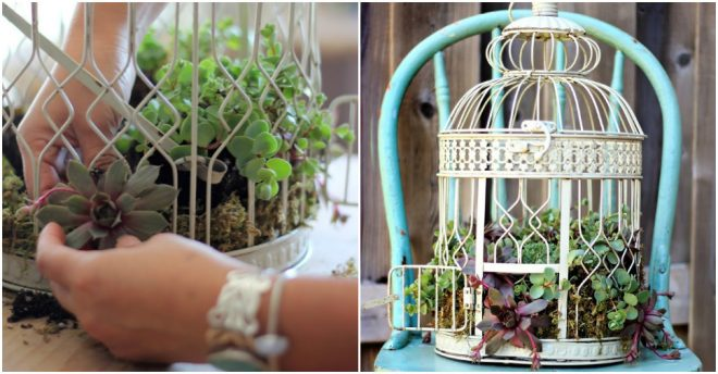 bird-cage-succulent-planter