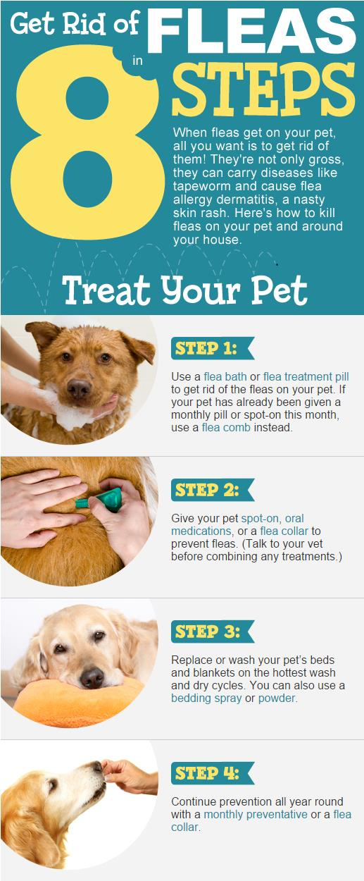 How To Get Rid Of Fleas 2
