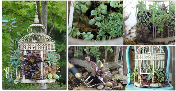 How To Make Bird Cage Succulent Planter