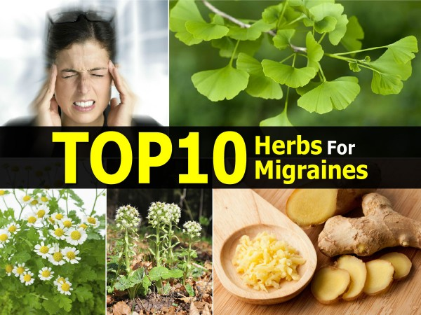 Top 10 Herbs For Migraine Relief