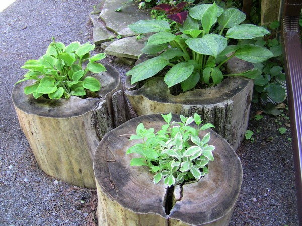 Tree Stump Planter Ideas 3