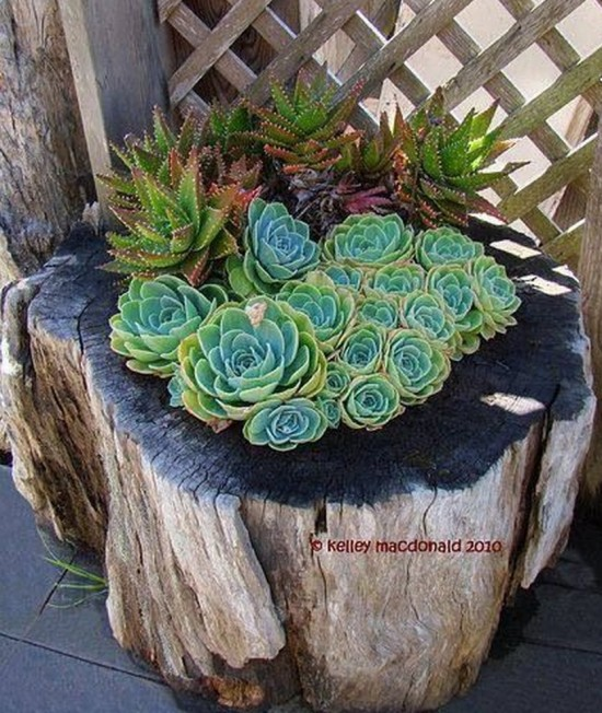 Tree Stump Planter Ideas 5